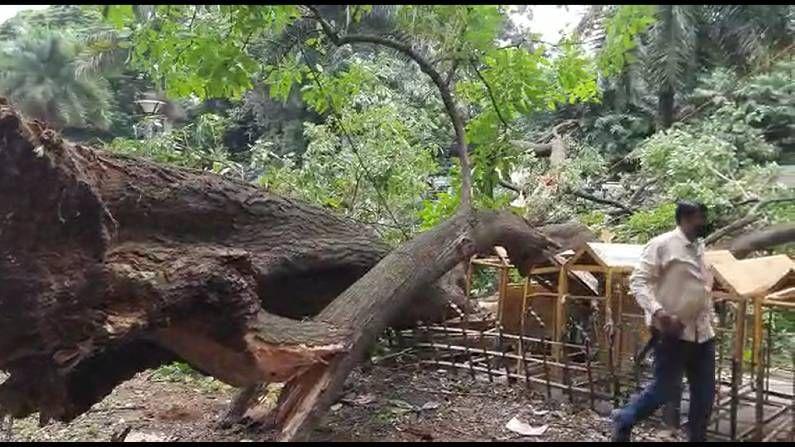 Tree Fall at Bengaluru