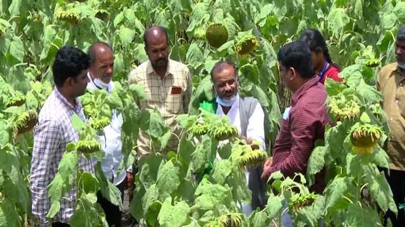 chitradurga Organic farming 4