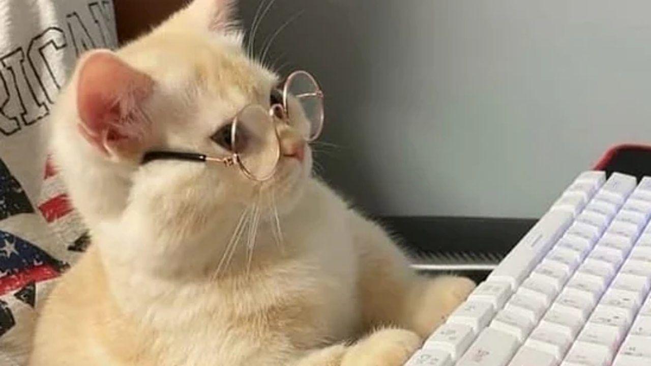 Viral Video: ಚಿನ್ನದ ಬಣ್ಣದ ಕನ್ನಡಕ ಧರಿಸಿ ಕಂಪ್ಯೂಟರ್ ಮುಂದೆ ಕುಳಿತ ಬೆಕ್ಕು; ವಿಡಿಯೋ ನೋಡಿ
